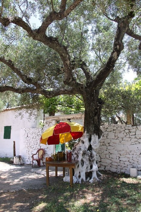 Country honey & olive oil for sale Exo Chora, Zakynthos, Ionian Islands, Greece