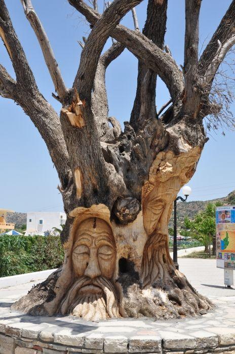 Nice olive tree.