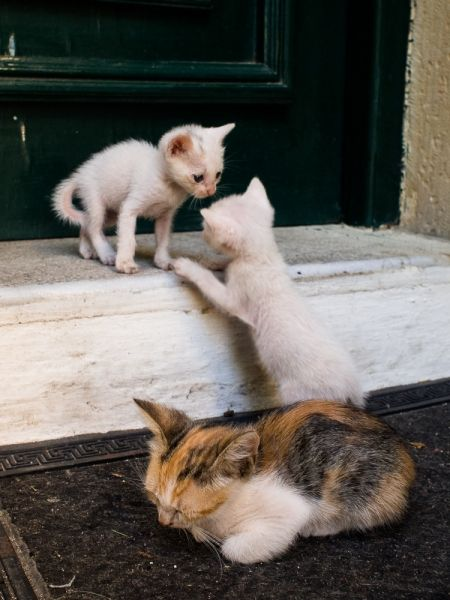 Kittens at Theotokos Monastery