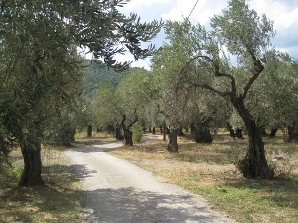 The old road between Skopelos and Stafilos.  if you have a car, or are walking, use this road it is beautiful.