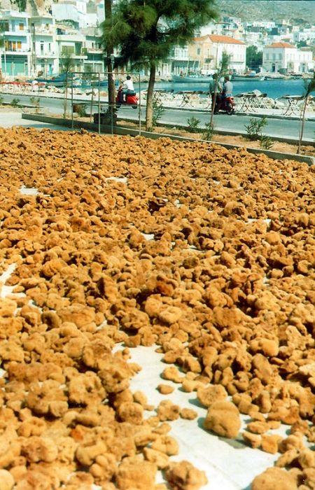 Fresh sponges on the island of Kalymnos