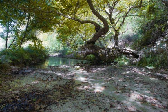 Acheron river, detail