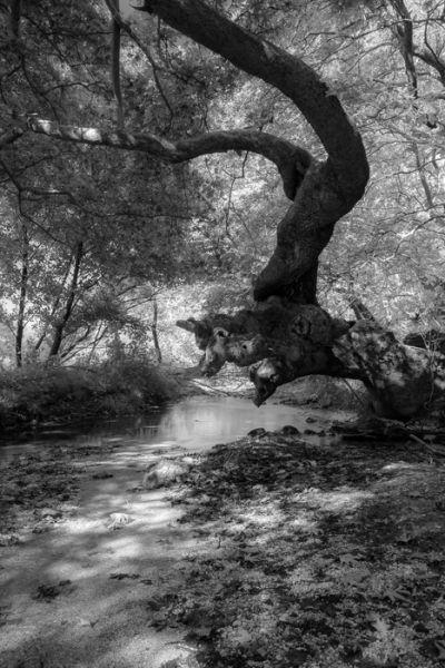 Acheron river, detail #2