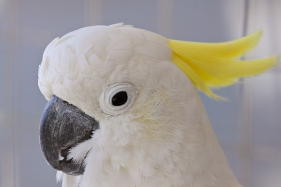 paros parrot