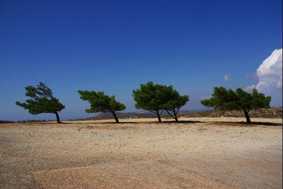 Trees at Moni Agia Elessa
