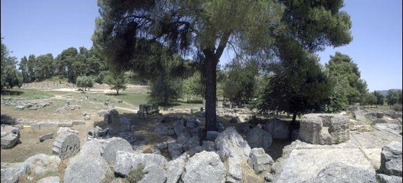 Hera's Tree