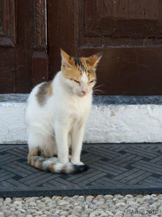 Lindos Cat2...