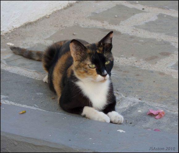 Lindos Cat3...
