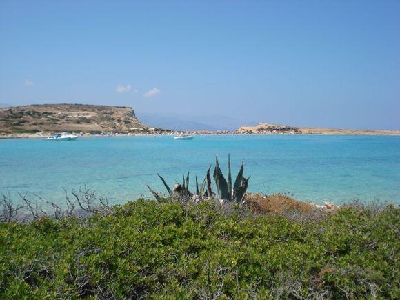 agava on the Pori beach