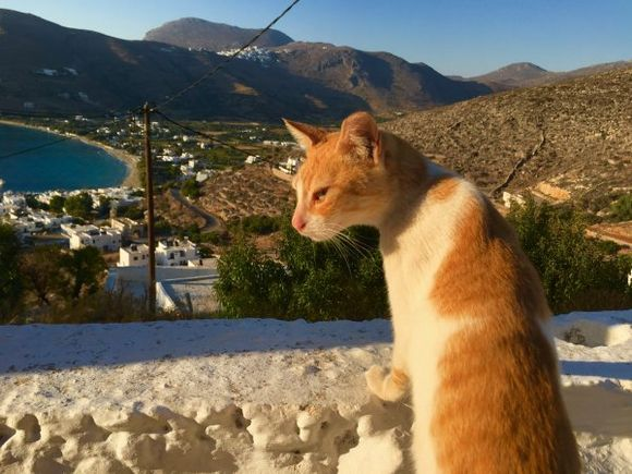 Aegali panoramic view with the cat model