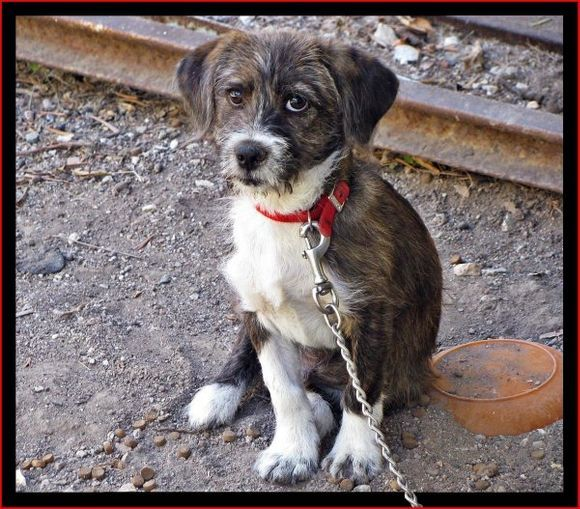 11-09-2012  Lesbos: Little dog in Petra
