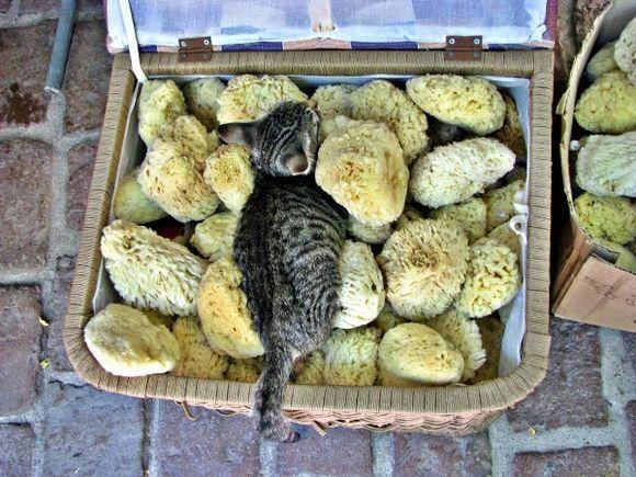 25-09-2012  Lesbos  SpongeCat (cousin of SpongeBob) ...;-)