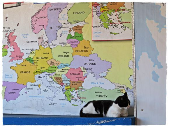 11-09-2019 Samos: Harbour (Vathy) .......Geography class by a Cat ....   ;-)