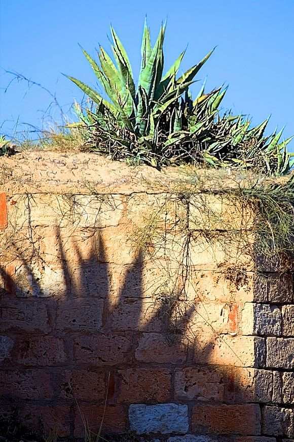 a small agave casts great shadows ahead ...