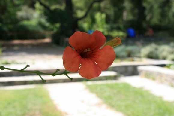 Beautiful flower:  The Diomidis Botanical Garden-beautiful place in which you will find peace and relax eyes and ask yourself are you in big crowdy Athens? Do not miss to visit this place if you like to escape from trafic and jump to be in touch with nature....