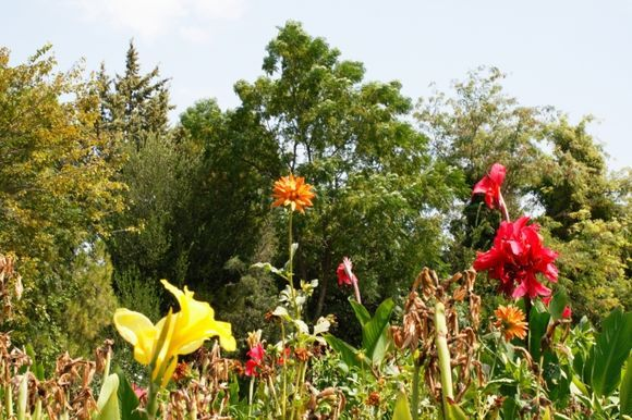 Union of flowers:  The Diomidis Botanical Garden-beautiful place in which you will find peace and relax eyes and ask yourself are you in big crowdy Athens? Do not miss to visit this place if you like to escape from trafic and jump to be in touch with nature....