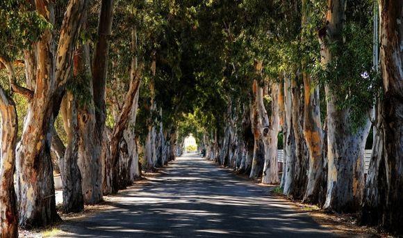 the road to Kolympia