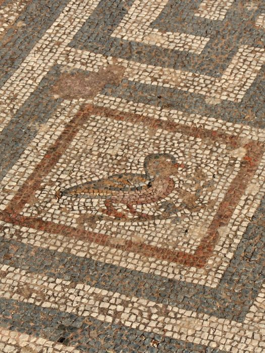 Kos town - Mosaic 2000 years old
