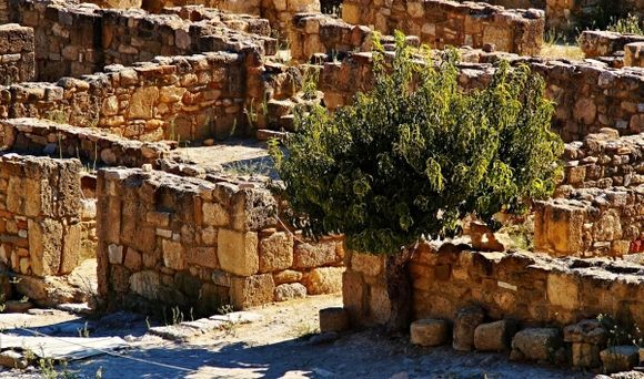 a trees in ancient city