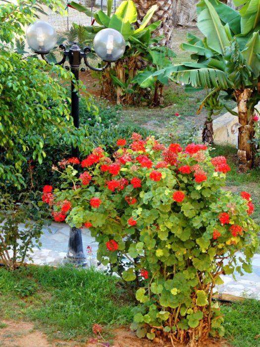 Bali - in garden of the hotel Talea Beach