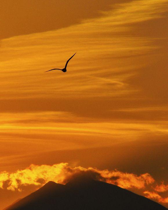 Golden flight. A seagull heads into a golden Cretan sunrise.