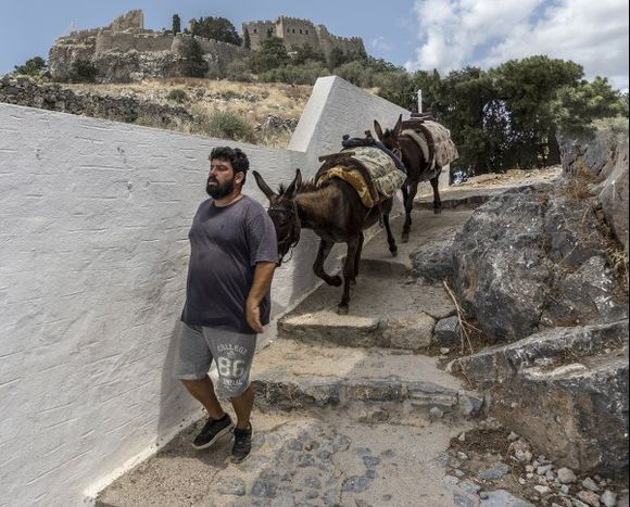 Donkeys of Lindos, for tourists to get to and from the Acropolis