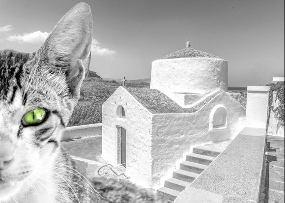 Cats of Lindos