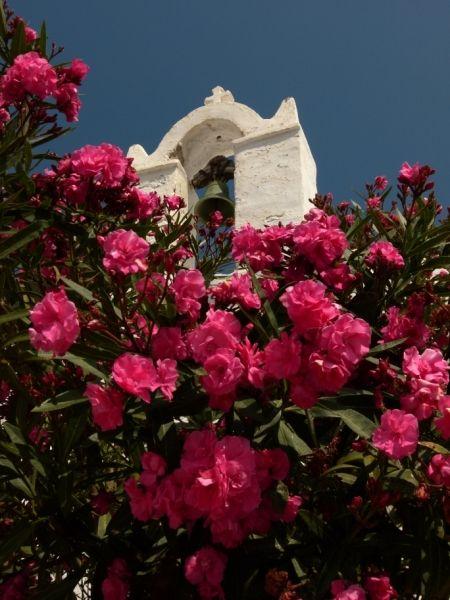 Belltower behind red blooms