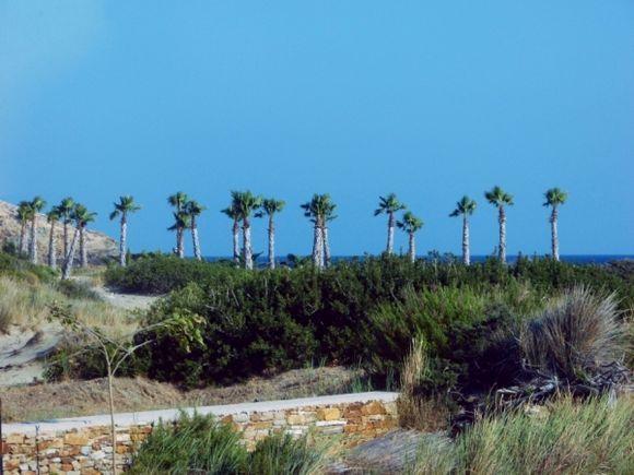 Palmtrees....