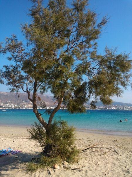 Beachview....