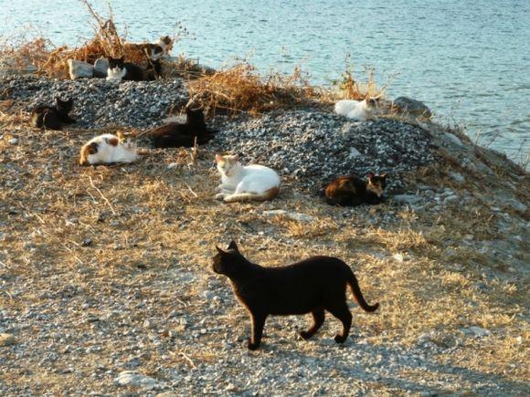 cat family..