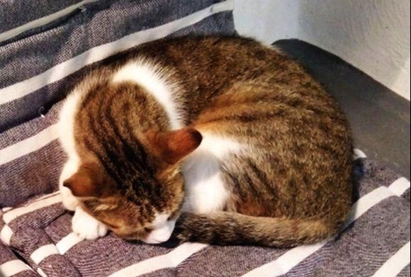 cat nap :)