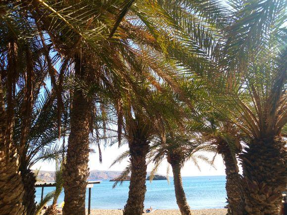Palm shadow at Vai beach