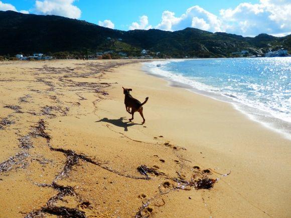 The joy of a empty beach.