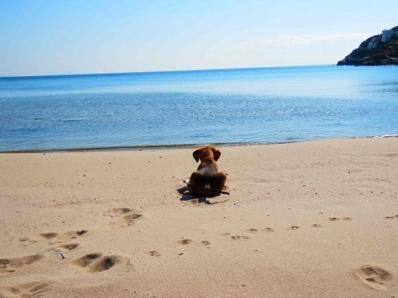 Hamish first trip to the beach.