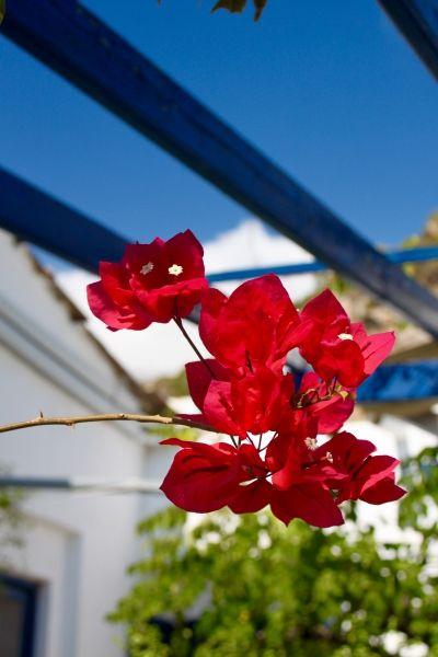 Autum flowers of Ikaria