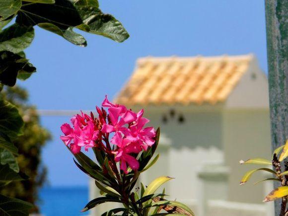 Corfu in May, Acharavi