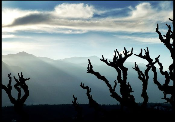 The sun is going behind the clouds, spreading rays of light over the White Mountains on Crete. On the foreground are the branches of a mulberry tree in silhouette.