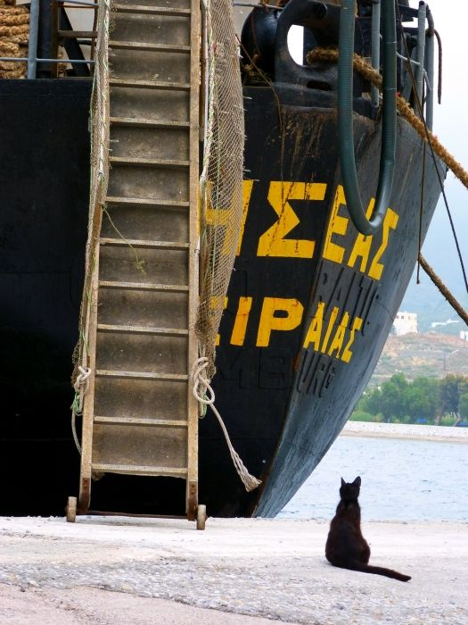 Black cat and boat with ladder on Katapola waterfront