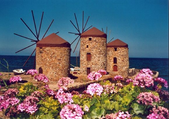 Windmills outside Chios Town with pink geranium