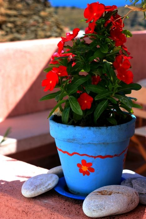 Blue pot with red flowers