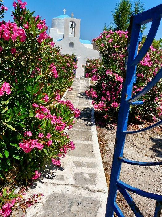 Church, alley and pink oleander, Livadakia