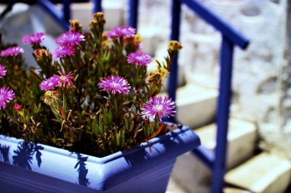 Blue wooden stairs and pot of flowers in Ano Syros alleys