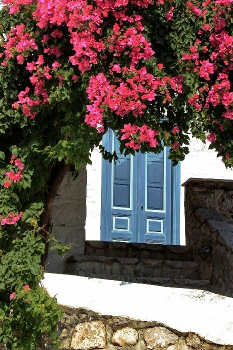 Entrance with blue door framed by bougainvillea blossoms, Hydra town