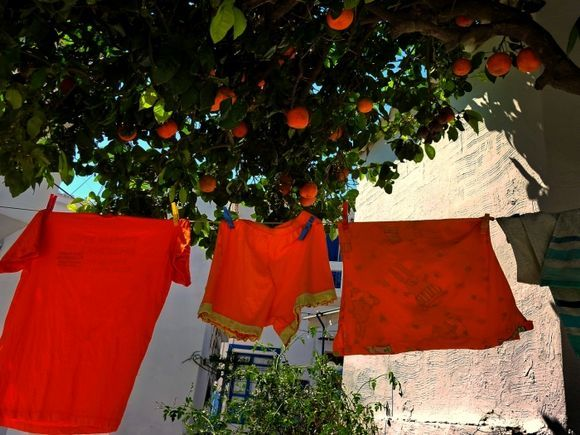 Orange tree with orange laundry