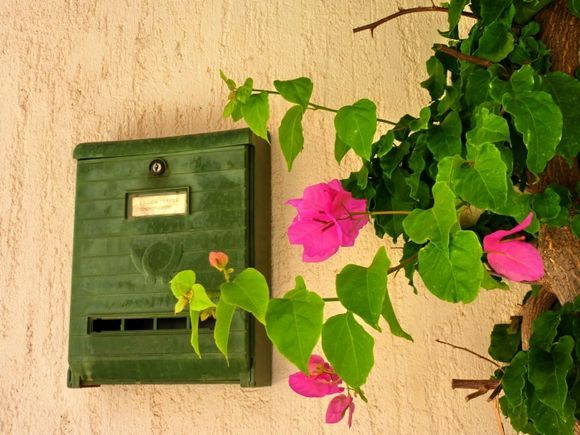 Mailbox and bougainvillea