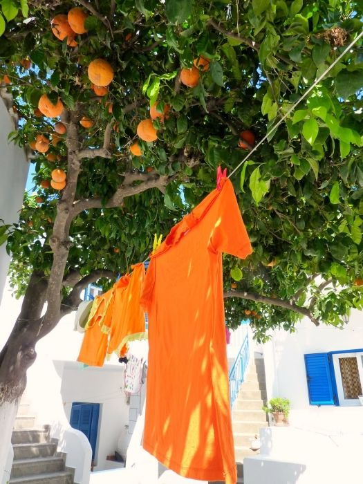 Laundry drying in the sun with orange tree