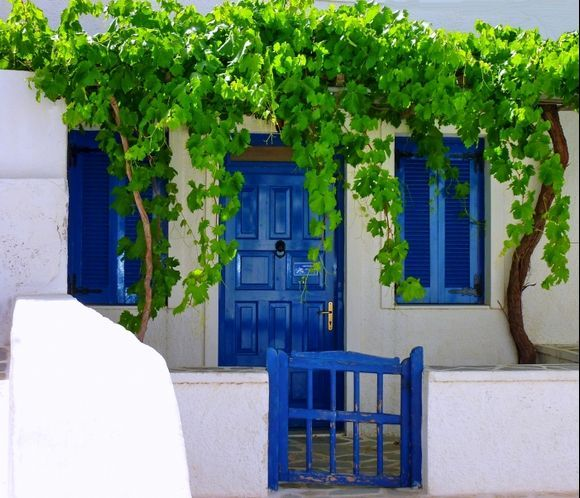 Facade with vine leaves