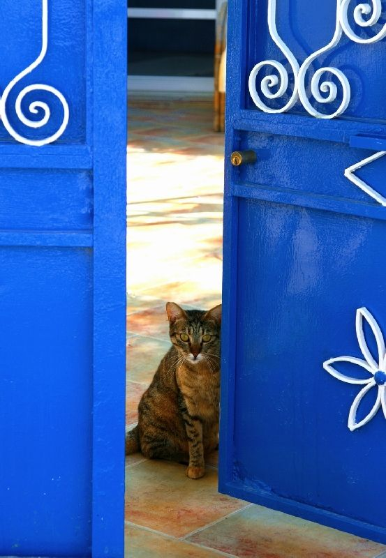 Cat and traditional house in Koskinou