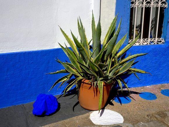 Blue facade with pot